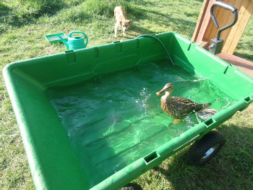 Viktor badet im Bollerwagen