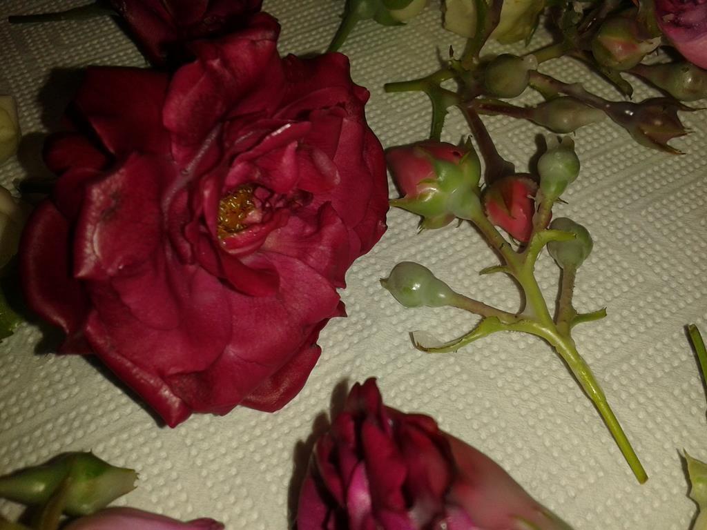 In Wachs konservierte Rosenblüten