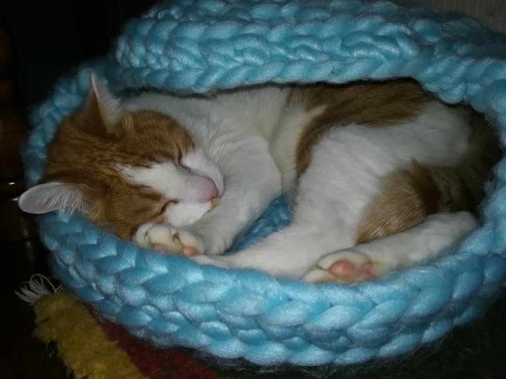 Moritz in der neuen Katzenhöhle