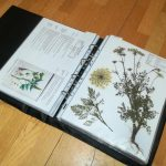 Eine Seite im Herbarium